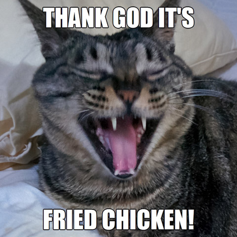 Tgif Or Tgifc Cat Memes
